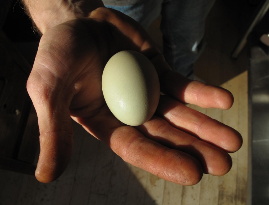 066_green_egg_low-870x661